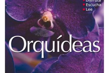 PIPOPES – Orquídeas
