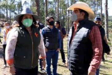 Promoverá Medio Ambiente acciones de recuperación forestal en Ahuazotepec